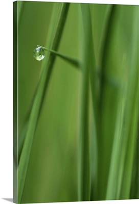 Single Raindrop on Blade of Grass