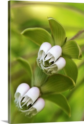 Tropical White Blossom Against Greenery