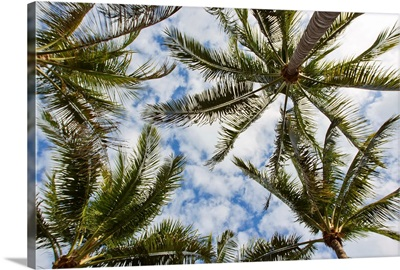 Looking up into the crown of palm trees, against a cloud-filled sky