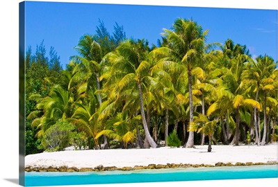 Scenic view of a tropical island beach full of palm trees