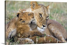 African Lion mother and young cubs