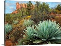 Agave and Coffee Pot Rock near Sedona, Arizona