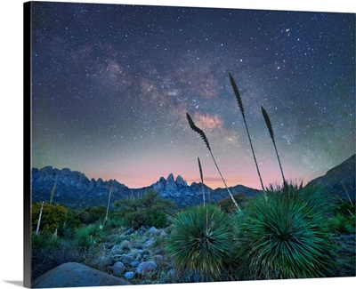 Agave At Night, Organ Mountains-Desert Peaks NM, New Mexico