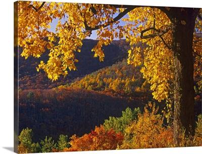 Autumn deciduous forest, Shenandoah National Park, Virginia