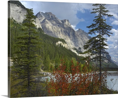 Boreal forest and Mount Wilson, Banff National Park, Alberta, Canada