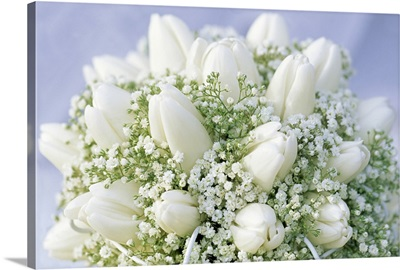 Bouquet of white Tulip (Tulipa sp) flowers and Baby's Breath (Gypsophila sp)