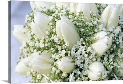 Bouquet of white Tulip (Tulipa sp) flowers and Baby's Breath (Gypsophila sp)