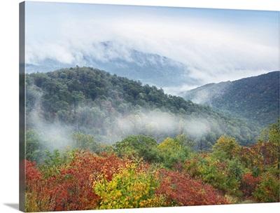 Broadleaf forest in fall colors, Shenandoah National Park, Virginia