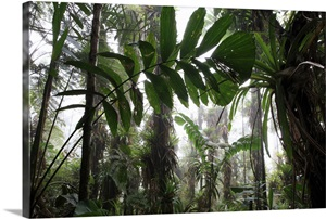 Bromeliad And Tree Fern At 1600 Meters Altitude In