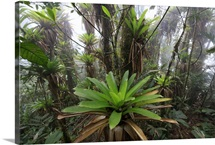 Bromeliad and tree fern in tropical rainforest