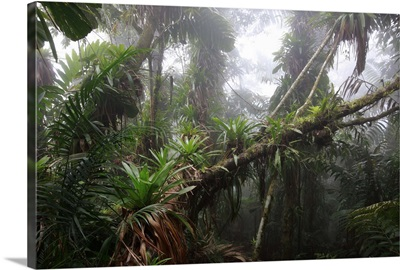 Bromeliad at 1600 meters altitude in tropical rainforest, Colombia