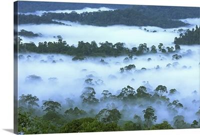 Canopy of lowland rainforest, Danum Valley Conservation Area, Borneo, Malaysia