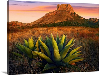 Casa Grande butte with Agave in foreground, Big Bend National Park, Texas