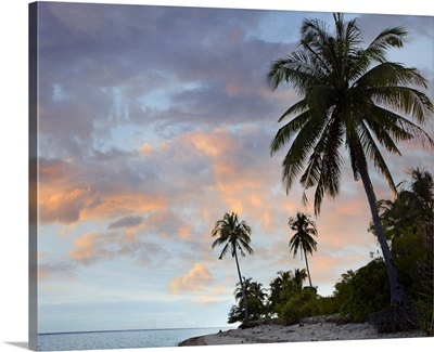 Coconut Palm (Cocos nucifera) trees, Pamilacan Island, Bohol Island, Philippines