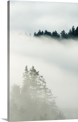 Coniferous forest in fog, Deception Pass State Park, Washington