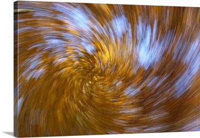 European Beech (Fagus sylvatica) abstract of autumn colors, Germany