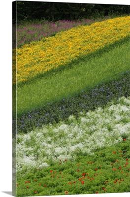 Flower crop on hillside, Hokkaido, Japan