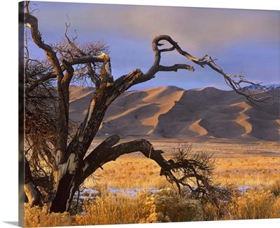 Grasslands and dunes, Great Sand Dunes National Monument, Colorado