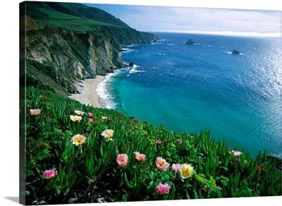 Ice Plant (Carpobrotus edulis), Big Sur coast near Bixby Creek, California