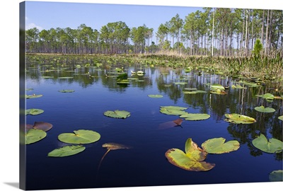 Lake with lily pads, southern Florida