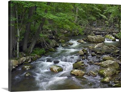 Little Stony Creek flowing through Jefferson National Forest, Virginia