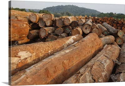 Logged timber from the tropical rainforest, Cameroon