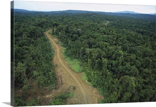 Logging road in lowland tropical rainforest, Aird River, Kikori Basin, Papua New Guinea