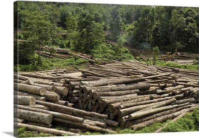 Logs in logging area, Danum Valley Conservation Area, Borneo, Malaysia