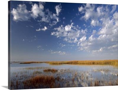 Marsh, Padre Island National Seashore, Texas