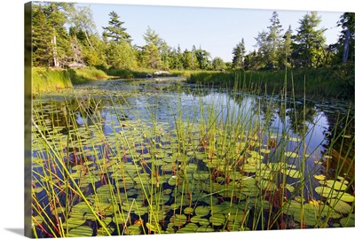 Marsh with reeds and lily pads surrounding a pond, West Stoney Lake, Nova Scotia, Canada