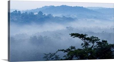 Mist over tropical rainforest, Kibale National Park, western Uganda