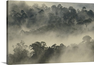 Mist rising from lowland primary forest at sunrise, Malaysia