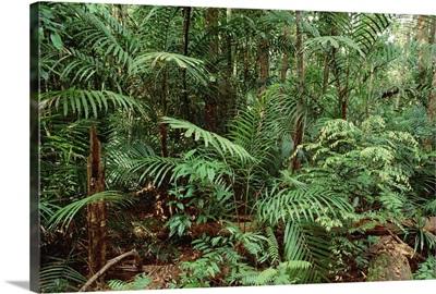 Mixed lowland dipterocarp tropical rainforest, Taman Negara National Park, Malaysia