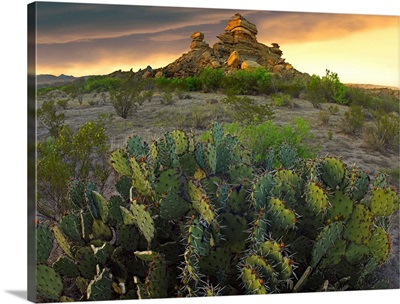 Opuntia (Opuntia sp) and hoodoos, Big Bend National Park, Chihuahuan Desert, Texas