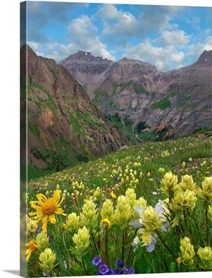 Paintbrush And Wildflowers, Governor Basin, Colorado