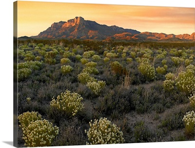 Pepperweed meadow beneath El Capitan, Guadalupe Mountains National Park, Texas