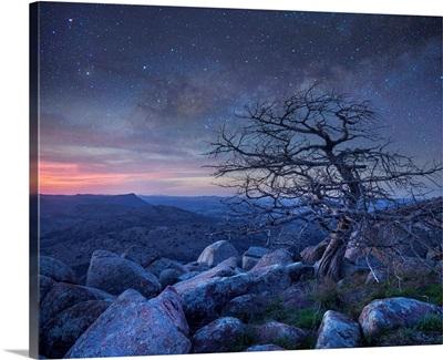 Pine Tree At Night, Mount Scott, Wichita Mountains NWR, Oklahoma