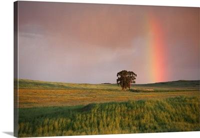 Rainbow over fields at twilight, Alentejo, Portugal