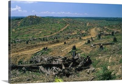 Rainforest deforestation for oil palm plantation, Sabah, Borneo, Malaysia