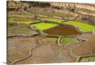 Rice terraces in highlands, Madagascar