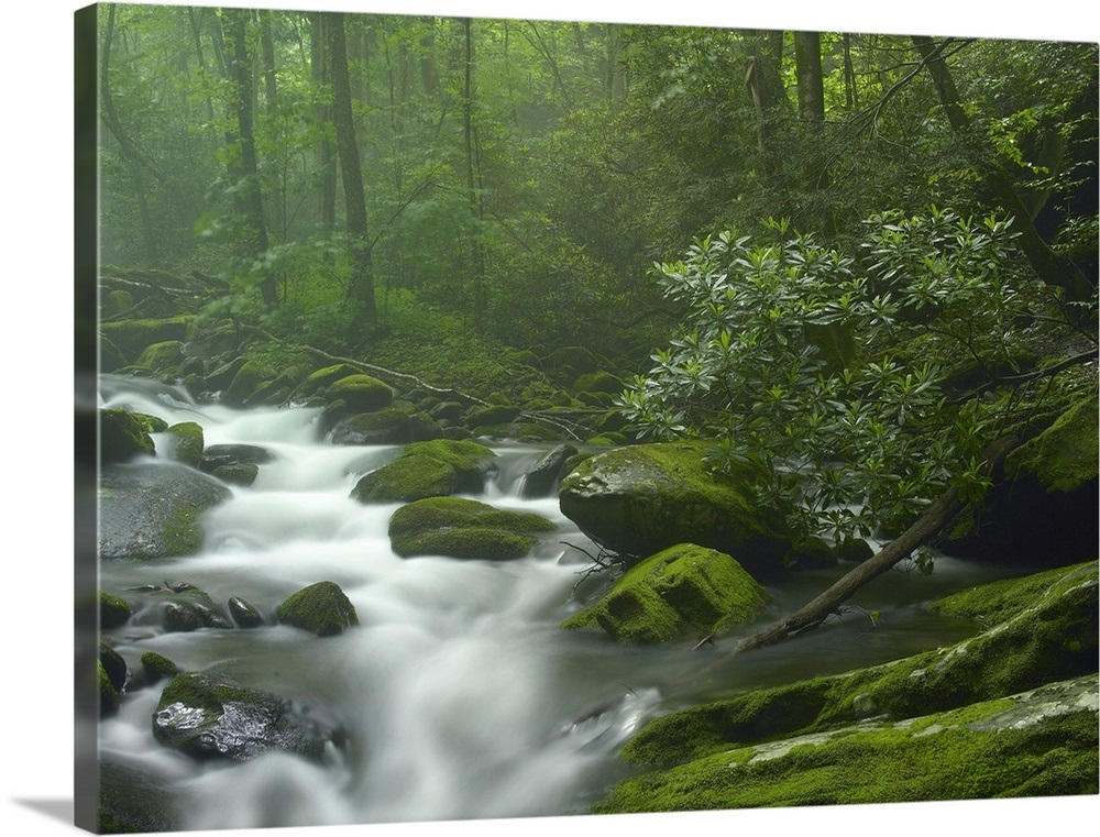 Roaring Fork River Flowing Through Forest In Great Smoky