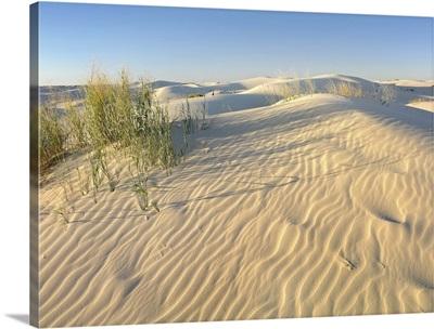 Sand dunes, Monahans Sandhills State Park, Texas