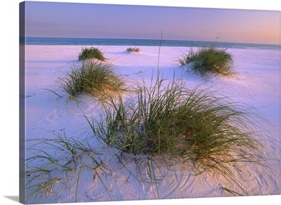 Sea Oats growing on beach, Santa Rosa Island, Gulf Islands National Seashore, Florida