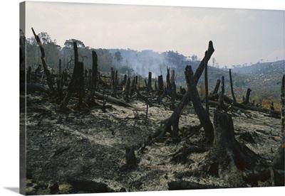 Slash and burn agriculture, Madagascar