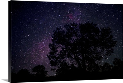 Starry sky with silhouetted Oak tree
