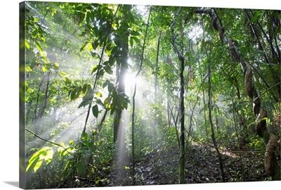 Sun shining in tropical rainforest, Barro Colorado Island, Panama
