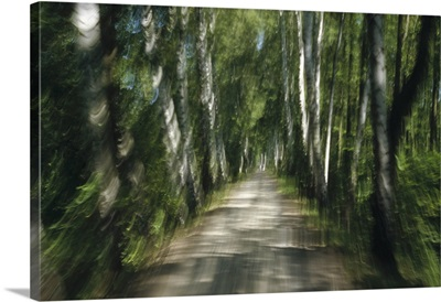 Tree lined road, abstract Oberbayern, Germany