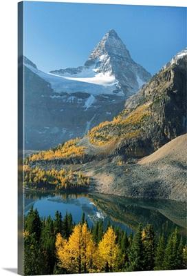 Trees below Mount Assiniboine with Sunburst Lake, British Columbia, Canada