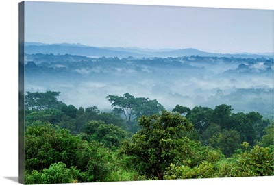 Tropical rainforest, Kibale National Park, western Uganda