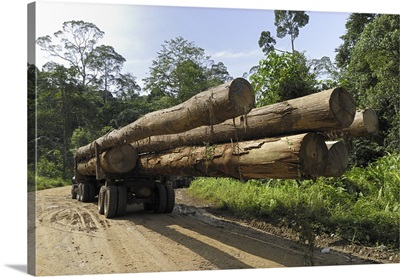 Truck with timber from a logging area, Danum Valley Conservation Area, Borneo, Malaysia